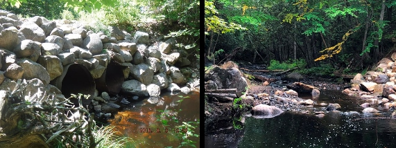 Beaverdam Stream before and after