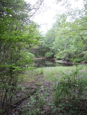 Clifford Park vernal pool