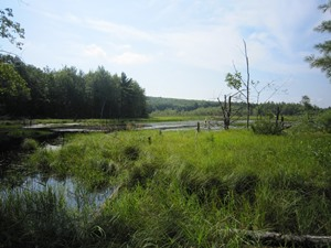 Suckfish Brook Wetlands